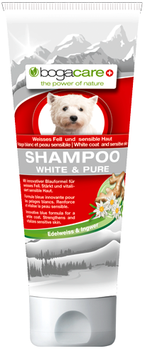 Bogacare-shampoo—white-and-pure-BG-83187